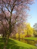 Spring in the Netherlands Royalty Free Stock Images