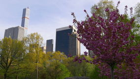 Spring new york city central park famous building tree blossom 4k usa. Usa spring new york city central park famous building tree blossom 4k stock video