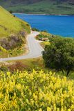 The spring in New Zealand Stock Image