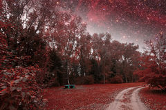 Spring night infrared photography. Stock Photos