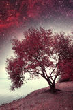 Spring night infrared photography. Royalty Free Stock Photo