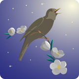 Spring Night with Nightingale Royalty Free Stock Photography