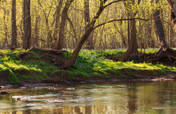 Spring in Northern Virginia Royalty Free Stock Photo