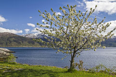 Spring in Norway Stock Images