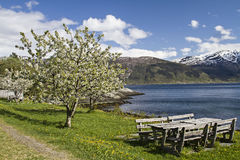 Spring in Norway Royalty Free Stock Photo