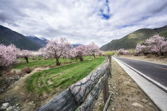Spring. The spring in Nyingtri Tibet royalty free stock images