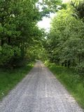 Spring oak forest road. Gravel road through an oak forest in the spring stock photography