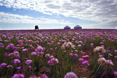 Spring Of Inner Mongolia Royalty Free Stock Photos