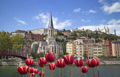 Spring in old Lyon. Cityscape of colorful old lyon france with red tulips Stock Photos