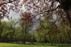 Spring at the old town cemetery in Karlovy Vary. Stock Image