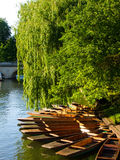 Spring On River Cam Stock Image
