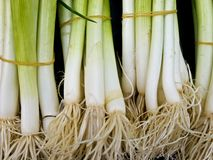 Spring onion Royalty Free Stock Photo