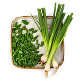 Spring onion Royalty Free Stock Photos