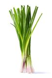 Spring onion Stock Photos