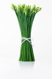 Spring onion Stock Image