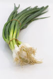 Spring onion as Cut  with selective focus Royalty Free Stock Photography