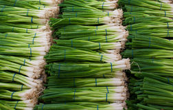 Spring onion background Stock Photo