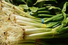 Spring onion background stock photos