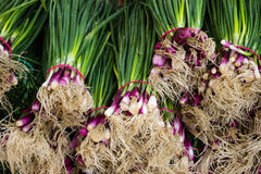 Spring onion closeup - bundles of onions Stock Images