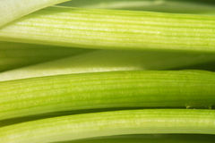 Spring Onion closeup Stock Photos