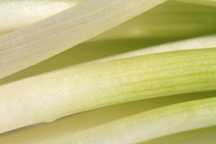 Spring Onion closeup Royalty Free Stock Photo