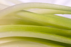Spring Onion closeup Stock Photography