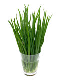 Spring onion in a glass Stock Photo