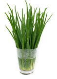 Spring onion in a glass Stock Image