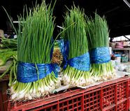 Spring onion Royalty Free Stock Images