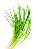 Spring onion isolated Stock Photography