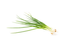 Spring onion isolated Royalty Free Stock Images