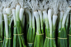 Spring onion. In the market Stock Photography
