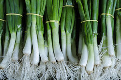 Spring onion. In the market place Stock Photo