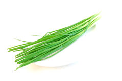 Spring onion shoots Stock Photography