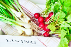 Spring onion and small radish Royalty Free Stock Image