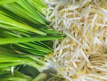Spring onion and sprouts stock photo