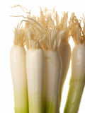 Spring onions. On white Royalty Free Stock Photo