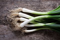 Spring onions Stock Photography