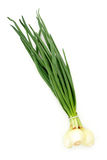Spring onions royalty free stock photos