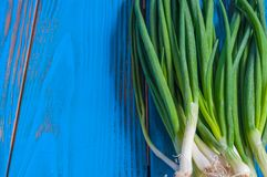 Spring onions also known as salad onions, green. Onions or scallions on blue wood table. Rustic background with free text space Stock Photography