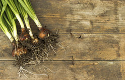 Spring onions Royalty Free Stock Images