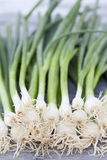Spring onions, close up Royalty Free Stock Images