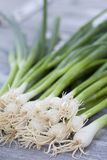 Spring onions, close up Stock Images