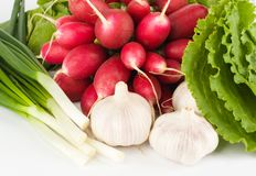 Spring onions, garlic, lettuce and radish Stock Photography
