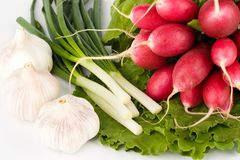 Spring onions, garlic, lettuce and radish Royalty Free Stock Images