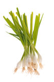 Spring onions, isolated Stock Photos