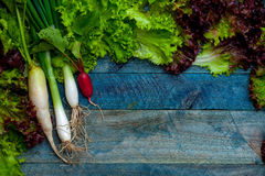 Spring onions radish and salad. Spring onions red white radish and green salad leaves fresh wet on wooden table background Royalty Free Stock Photos