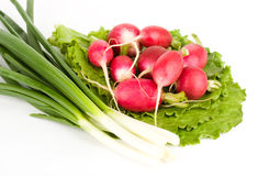 Spring onions and radishes on lettuce Royalty Free Stock Photography