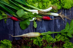 Spring onions radishes and salad. Fresh bunches of lollo rosso spring onions and radishes wet on wooden table background Royalty Free Stock Image