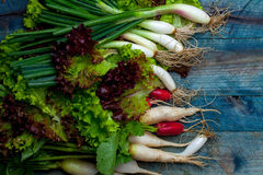 Spring onions radishes and salad. Spring onions red white radishes and green salad leaves fresh wet on wooden table background Royalty Free Stock Images